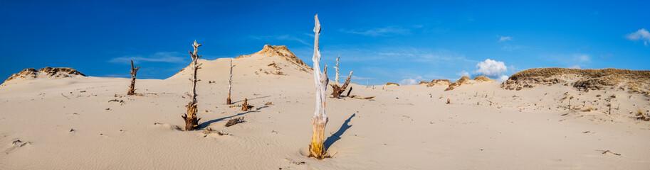 Fotografia panoramiczna, pustynia z uschniętymi drzewami
