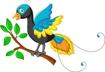 cute paradise bird cartoon