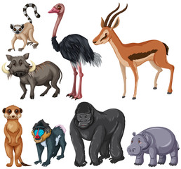 Different kind of wildlife animals