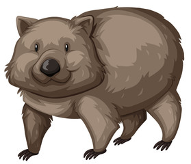Wild wombat on white background