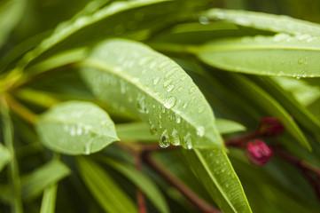 Wallpaper Macro water drops on Green Leaf