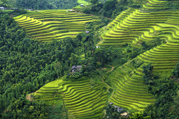 Beautiful Rice fields on terraced of  of Hoang Su Phi, Vietnam, Ha Giang province, North Vietnam on September  in rainy season it is the fresh rice fields in Vietnam landscapes.