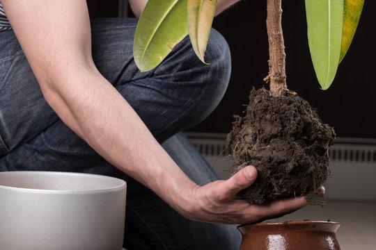 Transplanting a plant