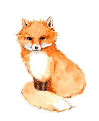 Fox animal. Watercolor