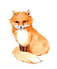 Fox animal. Watercolor