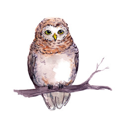 Owl - cute cartoon animal. Watercolor