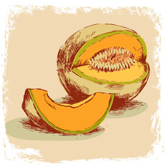 fruit collection.melon hand drawn.vector illustration