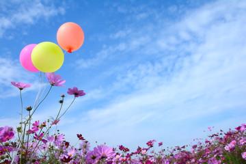 コスモスの花と風船 青空背景