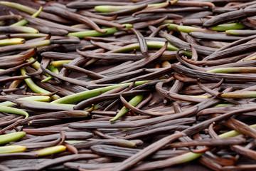 Vanilla dry fruit (vanilla bean, pod)  in the curing ferments process for grading vanilla flavor.