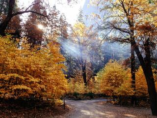 Fall Colors, Yosemite Valley, CA