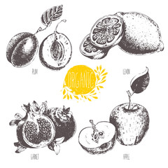 Series - vector fruit and spices. Hand-drawn illustration. Sketch. Healthy food. Linear graphic. Set of lemon, apple, plum and garnet