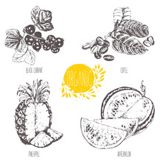 Series - vector fruit and spices. Hand-drawn illustration. Sketch. Healthy food. Linear graphic. Set of coffee, watermelon, pineapple and black currant.
