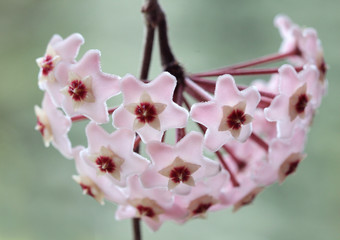 Leinwandbilder - Hoja różowa - kwiaty