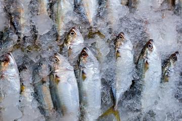 Fresh mackerel in ice at market