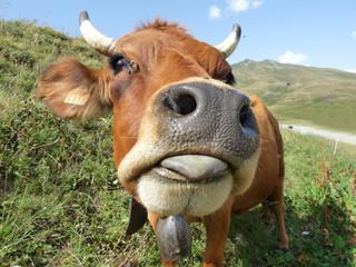 Papiers peints Vache Une belle vache Tarine au pays du beaufortain