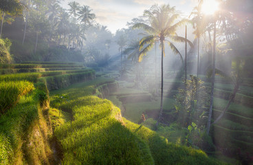 Photo sur Aluminium Bali terrace rice fields, Bali, Indonesia