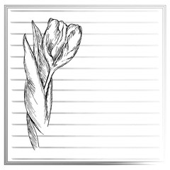 Graphic flower, sketch of tulip on white background. Vector floral illustration in vintage style. Hand drawn artwork. Template for wedding invitation, card, congratulation, greeting. Place for text.