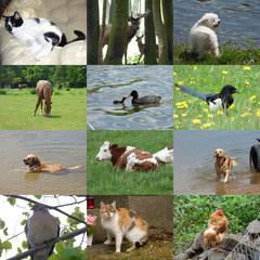 Set of 12 animals photos