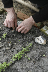 Detail of a man planting in a garden