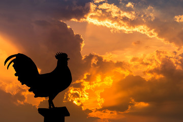 silhouette the rooster crow in the early morning