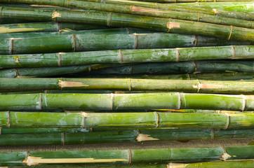 Bamboo pile photo