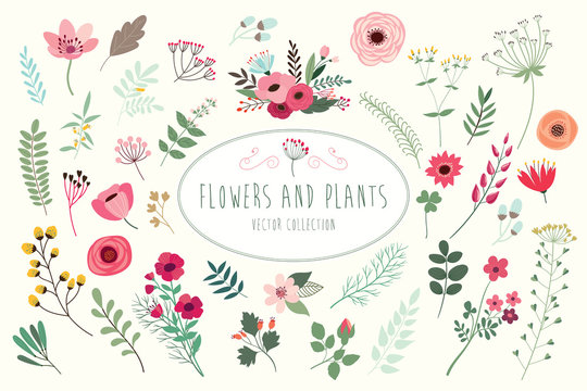 Flowers and plants. Hand drawn floral collection with flowers and leaves.