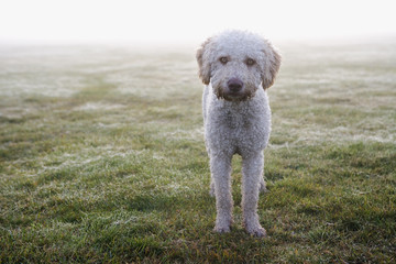 Portrait of dog standing on grass