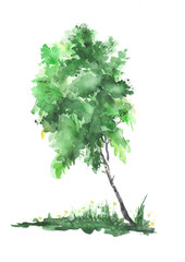 Green watercolor tree, birch, white background.