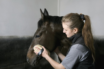 A young woman grooming a horse