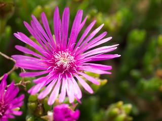 flowering cactus,