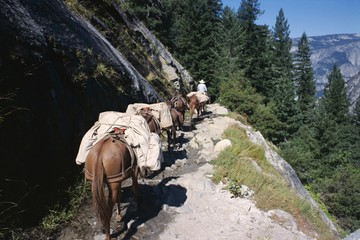 Pack horses and tourist trekking, Merced Valley, Yosemite National Park, UNESCO World Heritage Site, California, United States of America (U.S.A.), North America