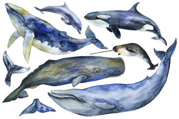 Marine Mammals Watercolor