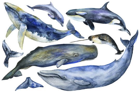 Marine Mammals Watercolor