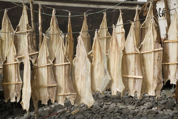 Fish drying, Camara de Lobos, Madeira, Portugal, Europe