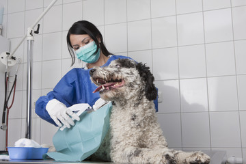 Female veterinarian examining dog on table in clinic