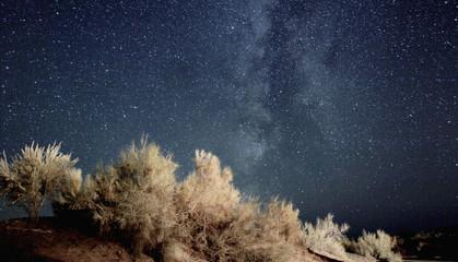 Dry plants against sky at night, Aydar lake, Uzbekistan