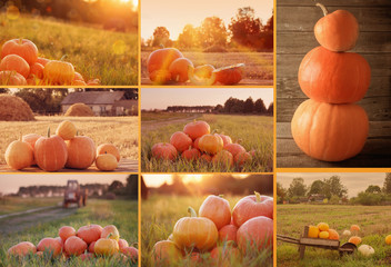 collage with pumpkins