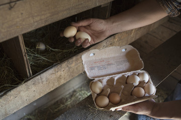 Cropped image of man collecting egg at poultry farm