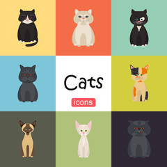 Cats color flat set icon