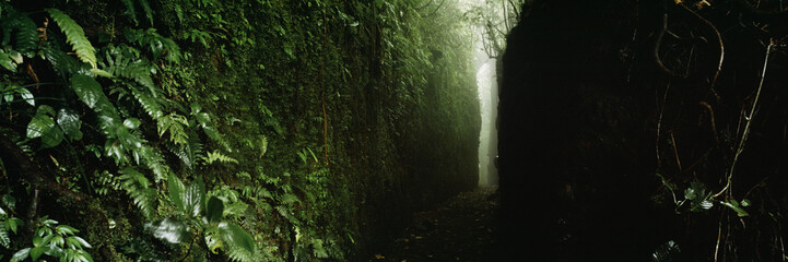 Narrow footpath in forest