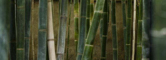 Close-up of green bamboo groves