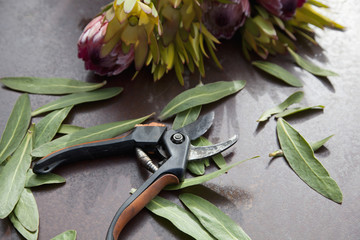 Secateurs and leaf, close-up