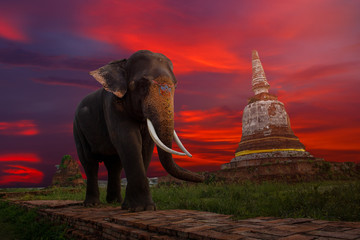 Elephants and stupa at Ayutthaya in Thailand