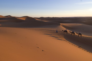 Dromedaries taking tourists on a sunset ride, Merzouga, Morocco, North Africa, Africa