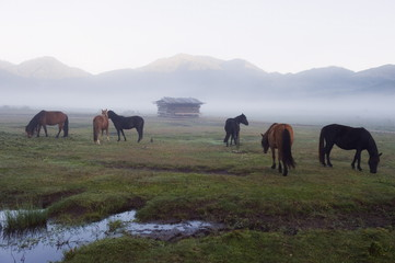 Horses in Phobjikha Valley, Bhutan, Asia