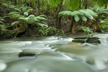 Rainforest, Beauchamp Falls, Great Ocean Road, Otway N.P., Victoria, Australia