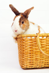 Spotted cute bunny in a basket on white wooden background