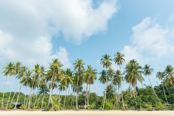 Tropical beach and coconut trees
