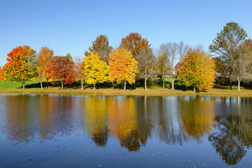 Fototapete - Colorful Trees Reflecting in Water in Autumn