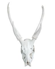 skull of  wildlife animals